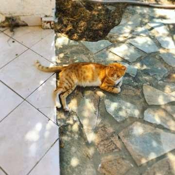 Cat, PRIO Writing Retreat, Aegina 2019